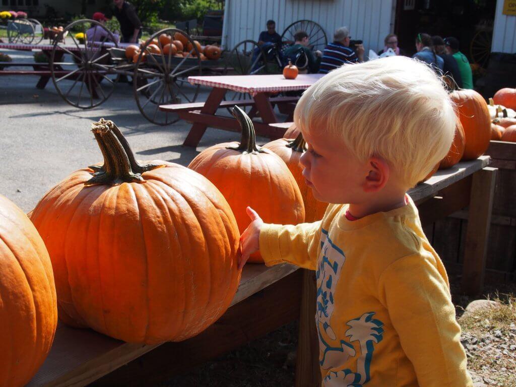 pumpkin picking for pumpkin broccoli soup