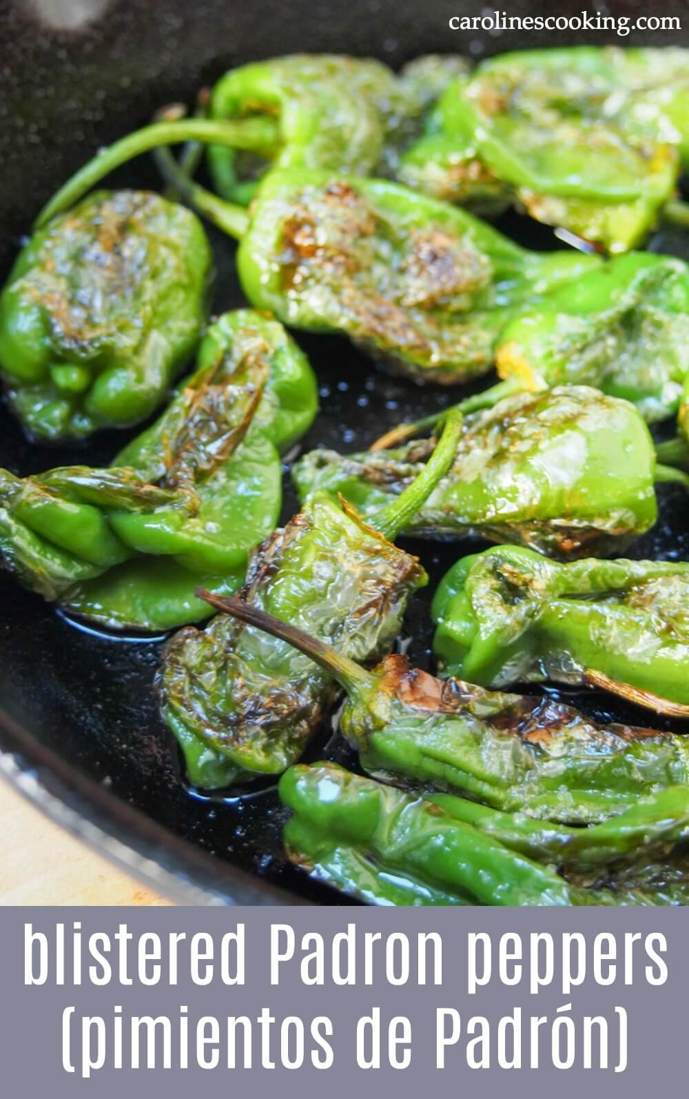 Blistered Padron peppers (pimientos de Padrón) - Blistered Padron peppers are a classic Spanish tapas that were always high up my list to order in Spain. But they're also incredibly easy to make at home, taking just a couple minutes! #padronpeppers #spanishtapas #tapas